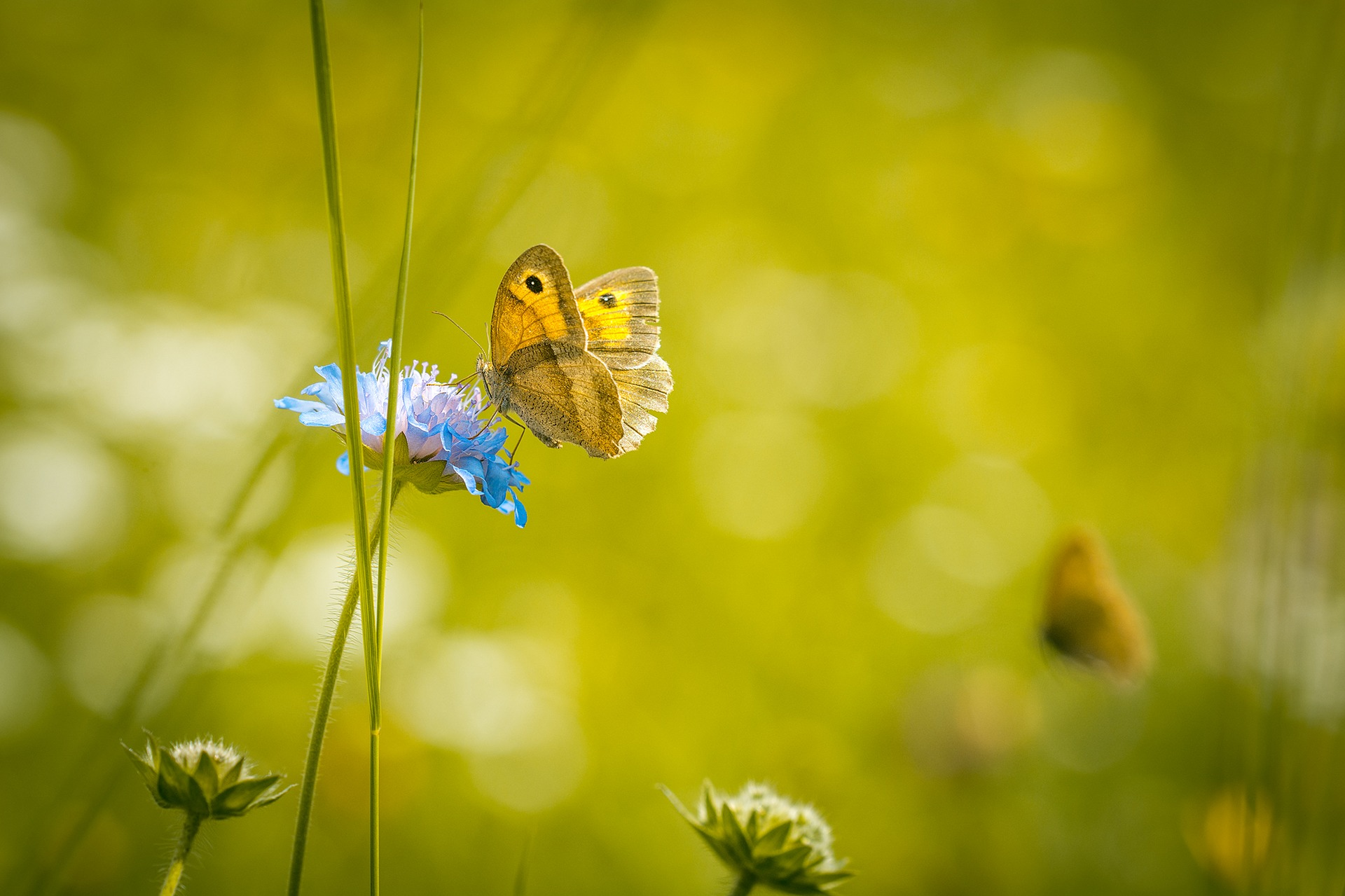 meadow-1622940_1920